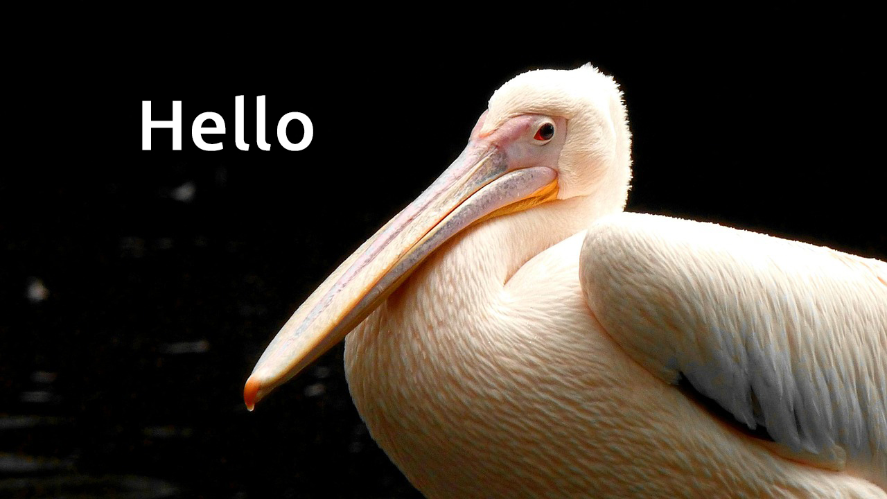 image from Hello Pelican